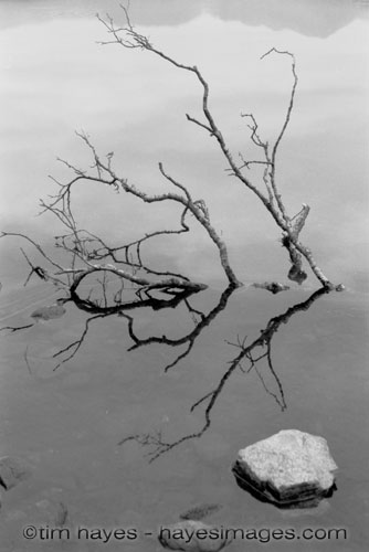 Tree Over Lake BW