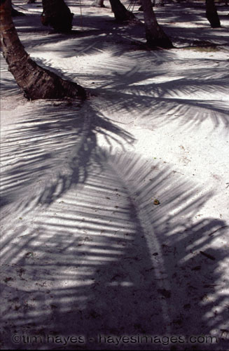 San Blas Palm Shadows